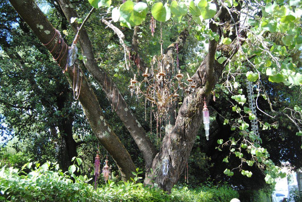 albero di giuda allestimento