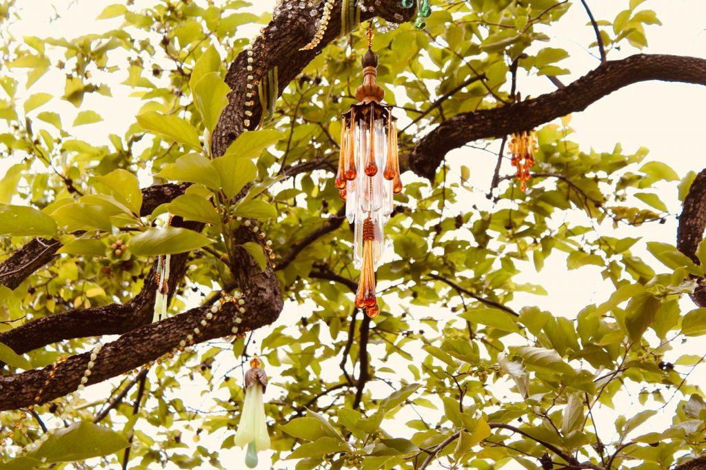 albero di melograno